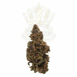Buy Craft cannabis in Toronto