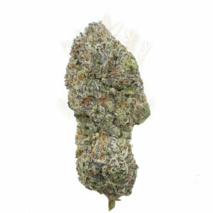 Weed Delivery in Toronto - Blue Dream Weed Strain