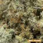 Mac 1 Weed Review