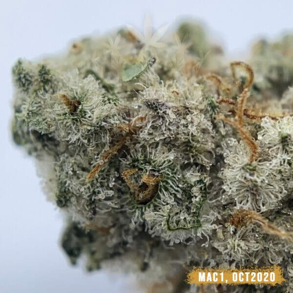 Miracle Alien Cookies Weed