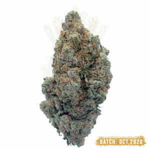 Astroboy weed strain toronto delivery