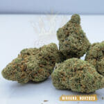 Nirvana Special in Toronto - Weed Delivery