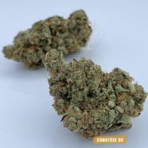Comatose OG Weed strain in Toronto