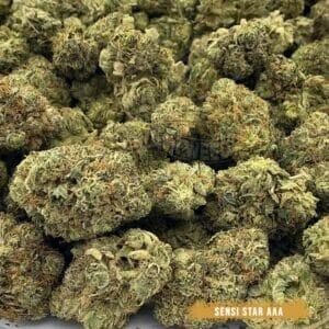 toronto cannabis delivery - Sensi Star Strain