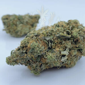 Northern Lights cannabis strain in toronto