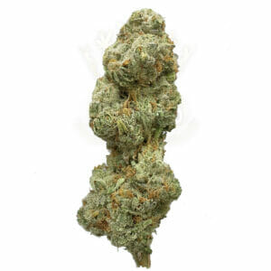 buy sweet cheese weed in toronto