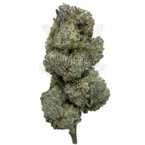 Etobicoke Same Day Weed Delivery - Blue Lights Strain
