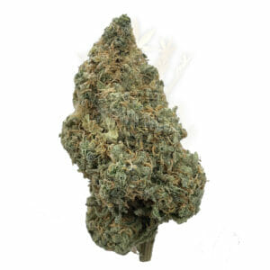 Find weed delivery same day near North York - Lemon Haze Weed Strain